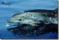 bottennos_delfin