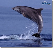 flasknosig_delfin