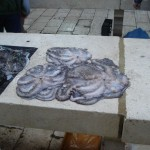 Fiskmarknaden i Split (5)